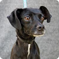 Adopt A Pet :: Sky - Redondo Beach, CA