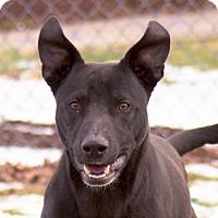 Adopt A Pet :: Reeses - Oxford, NC