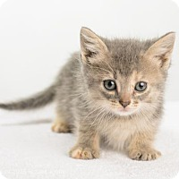Adopt A Pet :: Holly - Oxford, MS