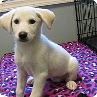 Adopt A Pet :: Purdy - Groton, MA