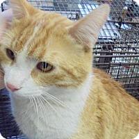 Adopt A Pet :: Sir - Rapid City, SD