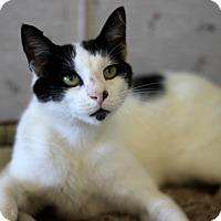 Adopt A Pet :: Terry - Dalton, GA
