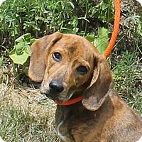 Adopt A Pet :: **TAVON** MEET AUG 6TH! - Mukwonago, WI