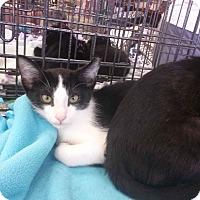 Adopt A Pet :: Tyler - Alamo, CA