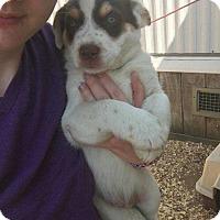 Adopt A Pet :: Lenny - Broken Arrow, OK
