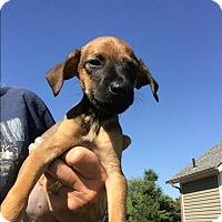 Adopt A Pet :: Swan - Memphis, MI