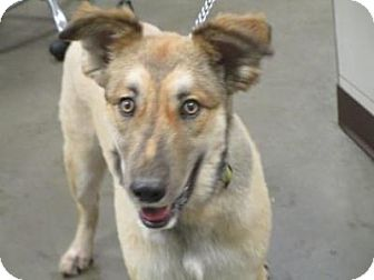 Collie Mix Dog for adoption in Union Grove, Wisconsin - Kody
