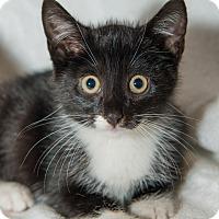 Adopt A Pet :: Ralph - New York, NY