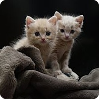 Adopt A Pet :: Theodore - Pleasanton, CA