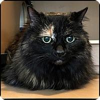 Adopt A Pet :: Daisy Maisy - Colorado Springs, CO