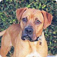 Adopt A Pet :: Zac Brown - Fremont, CA