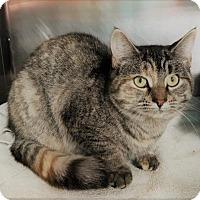 Adopt A Pet :: Ghost - Monroe, MI