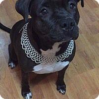 Adopt A Pet :: Aashka - Wichita, KS