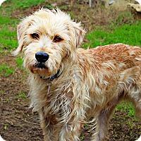 Adopt A Pet :: Ace - Shreveport, LA