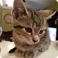 Adopt A Pet :: Caepron - Hainesville, IL