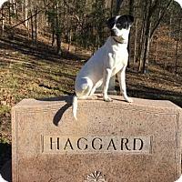 Adopt A Pet :: Alice - Waynesboro, TN