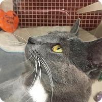 Adopt A Pet :: Sweat Pea - Richmond, VA