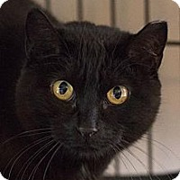Adopt A Pet :: Raven - Lombard, IL