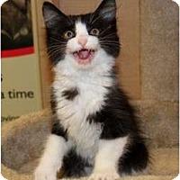 Adopt A Pet :: Jazz - Nolensville, TN