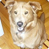 Adopt A Pet :: Gilda - Cheshire, CT