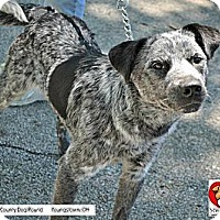 Adopt A Pet :: Blake - Painesville, OH