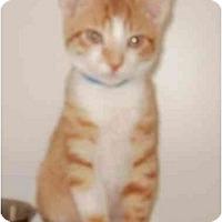 Adopt A Pet :: Hermes - Maywood, NJ