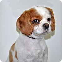 Adopt A Pet :: Charley - Port Washington, NY