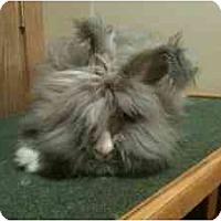 Adopt A Pet :: Callie - Maple Shade, NJ