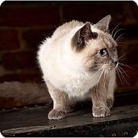 Adopt A Pet :: Snowflake - Owensboro, KY