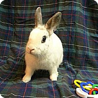 Adopt A Pet :: Sylvie - Newport, DE