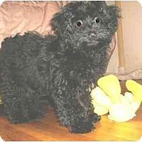 Adopt A Pet :: Dot - Mooy, AL