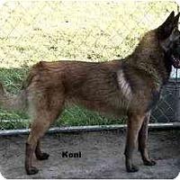 Adopt A Pet :: Koni - Hamilton, MT