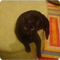 Adopt A Pet :: Jules--PETSMART - Muncie, IN