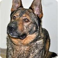 Adopt A Pet :: Winchester - Port Washington, NY