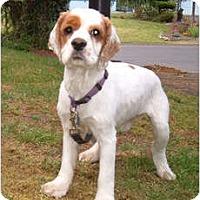 Adopt A Pet :: Clancey - Tacoma, WA