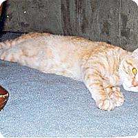 Adopt A Pet :: Punkin - Springfield, PA
