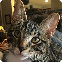 Adopt A Pet :: Jet - Winchester, CA