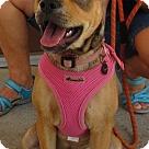 Adopt A Pet :: Toff