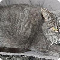 Adopt A Pet :: Missy - Red Deer, AB
