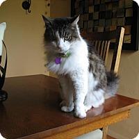 Adopt A Pet :: Mokey - Sacramento, CA