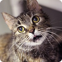 Adopt A Pet :: Felicity Tucci - Chicago, IL