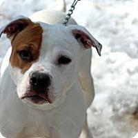 Adopt A Pet :: Daphne - Tinton Falls, NJ
