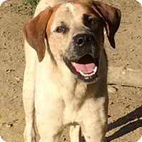 Adopt A Pet :: Bryson - Cincinnati, OH