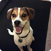 Adopt A Pet :: Dakota In San Antonio, Texas - Austin, TX
