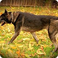Adopt A Pet :: Dasha - Ashland, OR