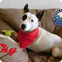 Adopt A Pet :: Hold - Skye - Arcadia, FL