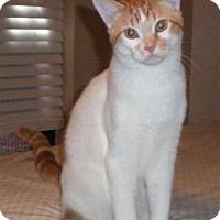Adopt A Pet :: Butterscotch - Poplarville,, MS