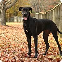Adopt A Pet :: Jetta - Virginia Beach, VA