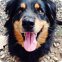 Adopt A Pet :: Roscoe - Phoenix, AZ