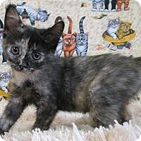 Adopt A Pet :: TAURUS - New Cumberland, WV